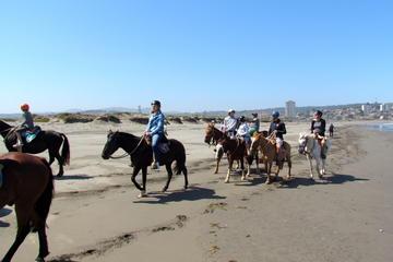 Passeio privado a cavalo na costa de Concon, Viña del Mar e...