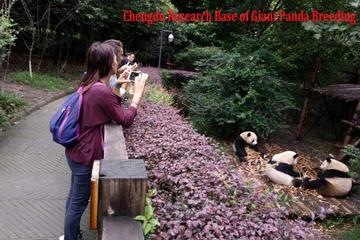 Half Day Private Tour: Chengdu Research Base of Giant Panda Breeding