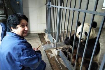 One Day Volunteer Experience at Dujiangyan Panda Base
