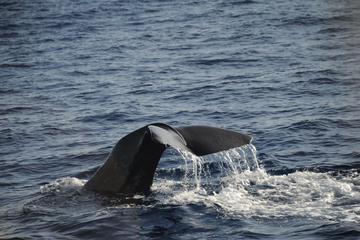 Mega Bite Wal- und Delfinbeobachtung...