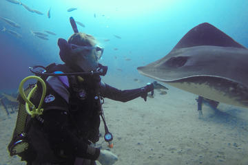 SSI Fish Identification Specialty...