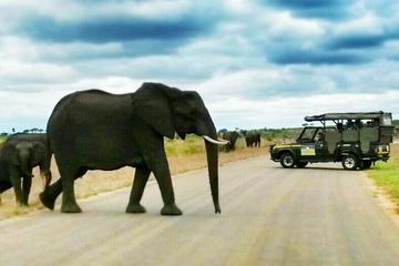 Safari van één volle dag door Kruger Nationaal Park vanuit Hazyview