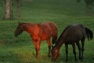 Thoroughbred Horse Farm Tour in