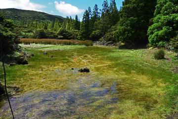 Half-day Hike in Terceira
