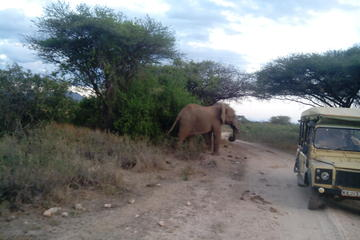 12 Day Kenya and Tanzania Safari from...