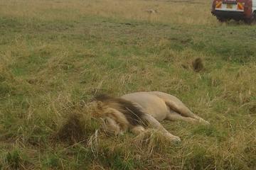 4 Days 3 Nights Group  safari to...