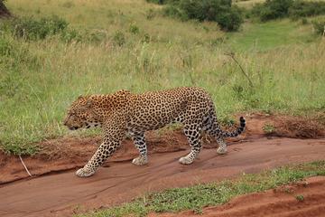 4 Days group budget safari to Maasai Mara only