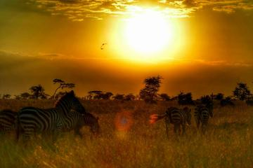 8 Days Best of Kenya and Tanzania Safari From Nairobi