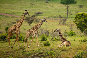 Arusha National Park Guided Day Tour