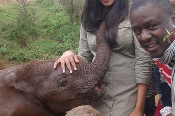 Day tour to Giraffe Center, David Sheldrick and Bomas of Kenya