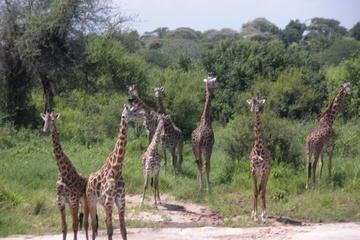Ngorongoro-Nationalpark und...