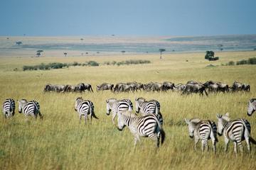 Overnight Private Safari to Maasai Mara 2