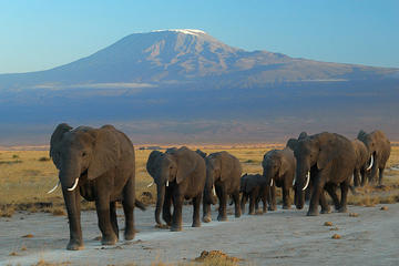 Overnight tour to Amboseli National...