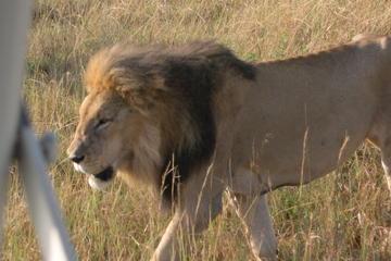Safari guiado de 3 días en Maasai...