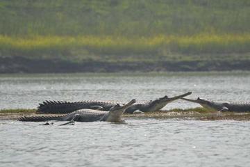 National Chambal Sanctuary und Alligatoren - Tagestour von Agra