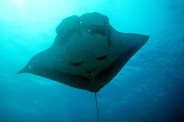 2jours de plongée sous-marine aux îles Similan au départ de Phuket