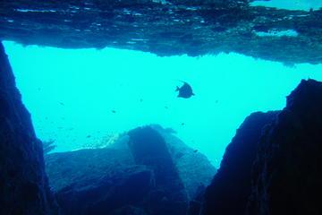 Dykning ved Similan, heldagstur fra Phuket