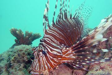 Plongée sous-marine à Kata Beach