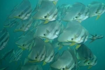 Racha Yai dykkertur fra Phuket