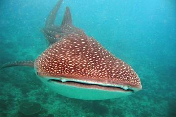 Sortie plongée sous-marine d'une...