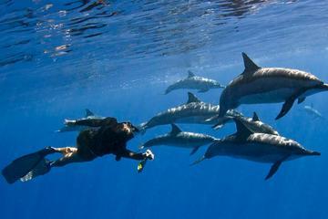 ケアラケクア湾でシュノーケリングを楽しみ、野生のイルカと泳ぐ