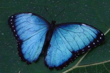 Jardin aux papillons et animalier dans le centre écologique Danaus