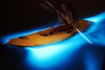 Jamaica Private Tour to Luminous Lagoon