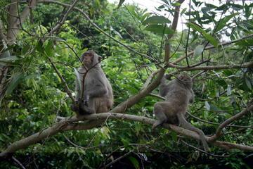 Hanoi - Cuc Phuong National Park 1...