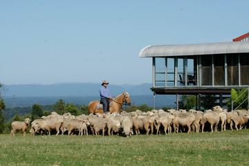 Tobruk Sheep Station: Farm and