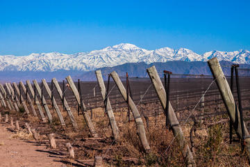 Lujan Wine Region Tour with Lunch from Mendoza