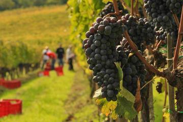 Excursión para los amantes del vino a Brunello y Nobile: Montalcino y...