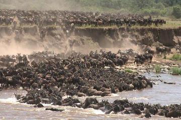 3 Day Masai Mara safari