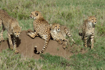 4-Day Kidepo Wild Life Safari