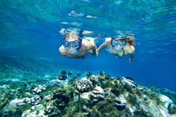 Schnorcheltour nach Molokini und Turtle Arches