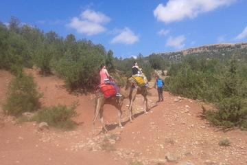 Private Day Trip from Marrakech: Camel Ride and Hike in the High Atlas Mountains