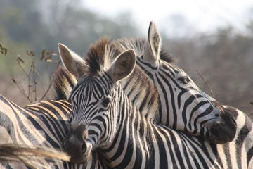 5-Day Tented Pilanesberg Safari from Johannesburg