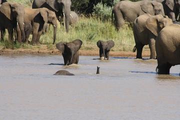 Excursion safari Pilanesberg au départ de Johannesburg