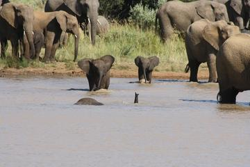 Pilanesberg Safari Tour from...