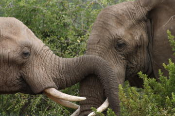 Private Tour: Pilanesberg National...