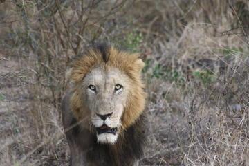 Private Tour: Pilanesberg Walking Safari from Johannesburg