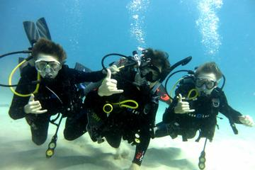 Book Discover Scuba Diving from Waikiki on Viator