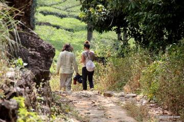 Full day trekking at Letchmi Hills in Munnar