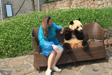 Private Day Tour with Panda Holding at Dujiangyan Panda Base and...