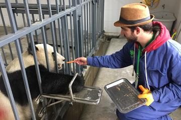 Wolong Panda Base Volunteering Program with Photo-taking with Panda Option