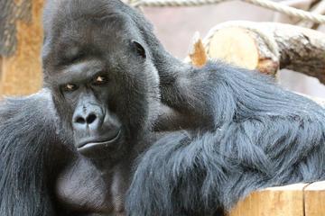 Privater Hin- und Rücktransfer zum Prager Zoo