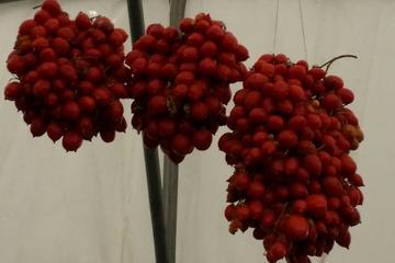 Excursión privada de un día: Herculano y cata de vinos