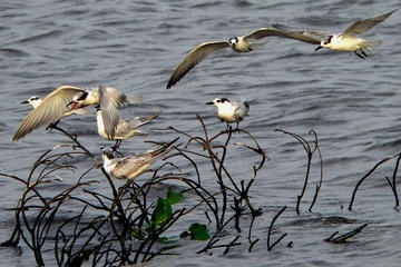 Private Muthurajawela Sanctuary Bird Watching Tour from Colombo