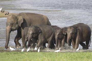Private Tour: Hurulu Eco Park Safari