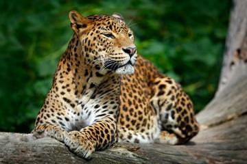 Private Tour: Yala National Park...