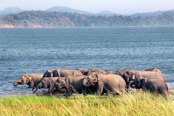 Private Tour: Yala National Park...